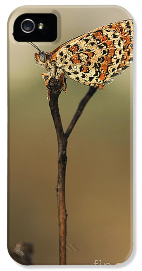 Butterfly IPhone 5 / 5s Case featuring the photograph Lesser Spotted Fritillary by Alon Meir
