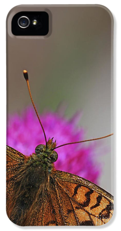 Lesser Spotted Fritillary IPhone 5 / 5s Case featuring the photograph Lesser Spotted Fritillary by Amos Dor