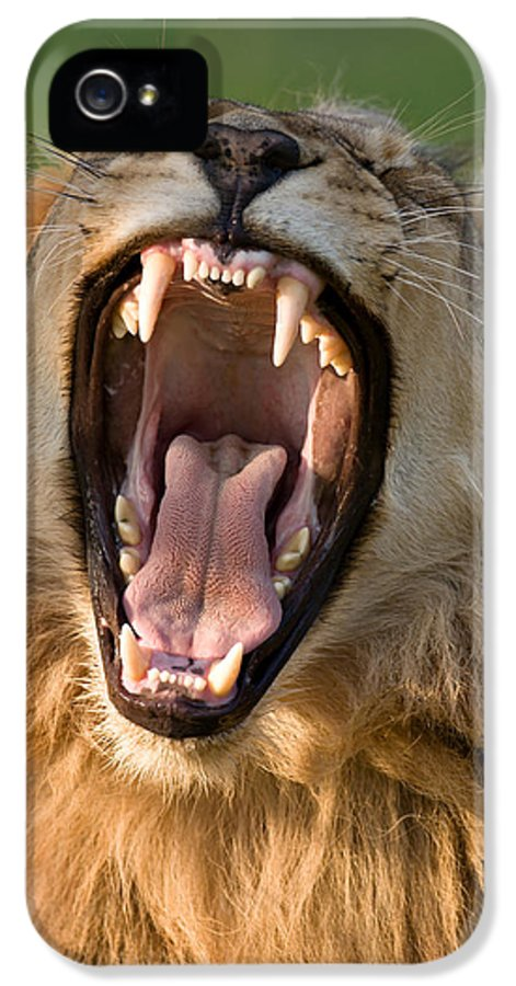 South IPhone 5 / 5s Case featuring the photograph Lion by Johan Swanepoel