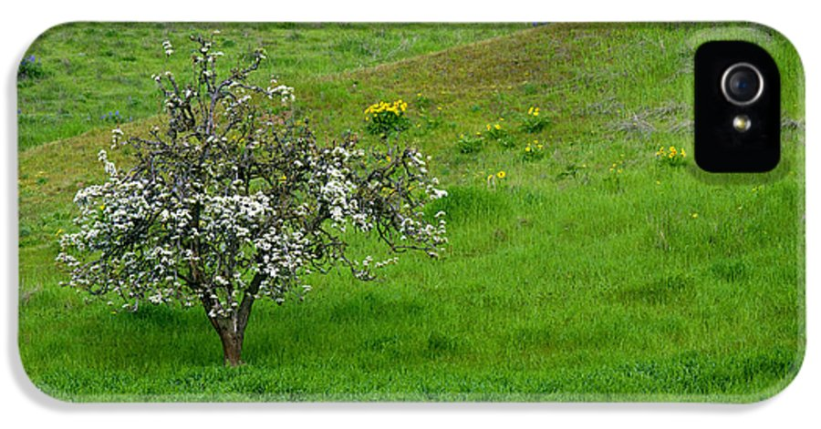 Meadow IPhone 5 / 5s Case featuring the photograph Long Forgotten by Mike Dawson