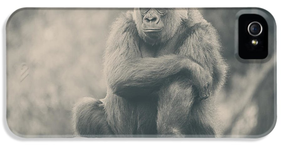 Gorillas IPhone 5 / 5s Case featuring the photograph Looking So Sad by Laurie Search