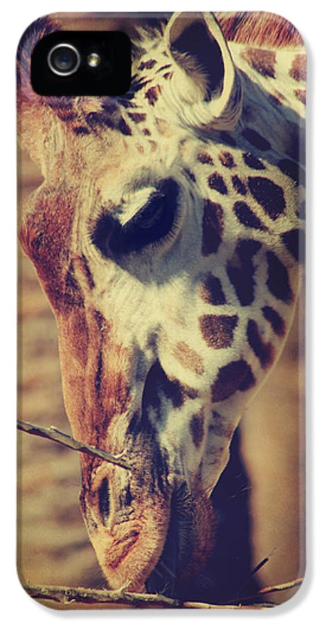 Giraffes IPhone 5 / 5s Case featuring the photograph Lunchtime Twigs by Laurie Search