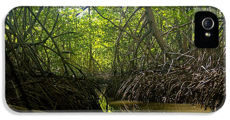Nature IPhone 5 / 5s Case featuring the photograph mangrove forest in Costa Rica 1 by Rudi Prott