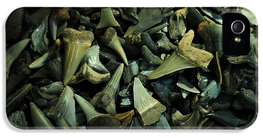 Shark Teeth IPhone 5 / 5s Case featuring the photograph Miocene Fossil Shark Tooth Assortment by Rebecca Sherman