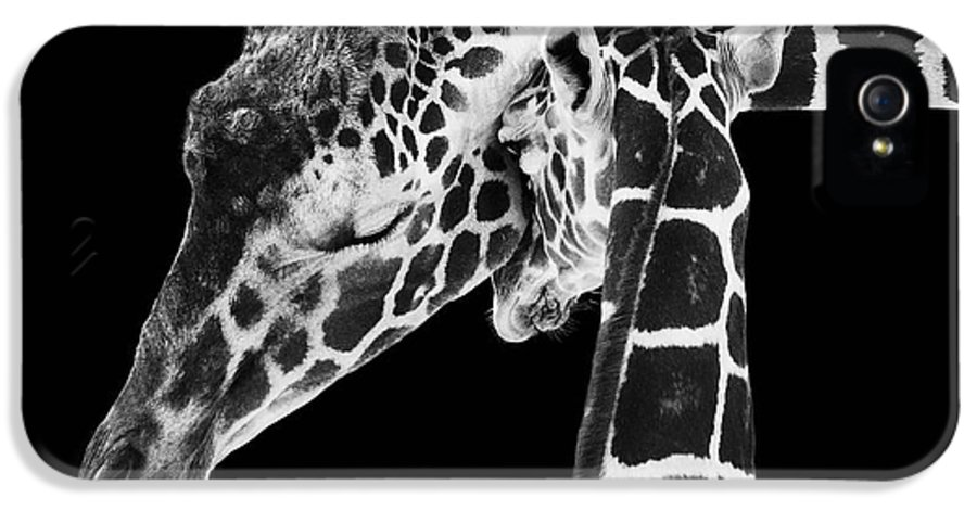 3scape Photos IPhone 5 / 5s Case featuring the photograph Mother And Baby Giraffe by Adam Romanowicz