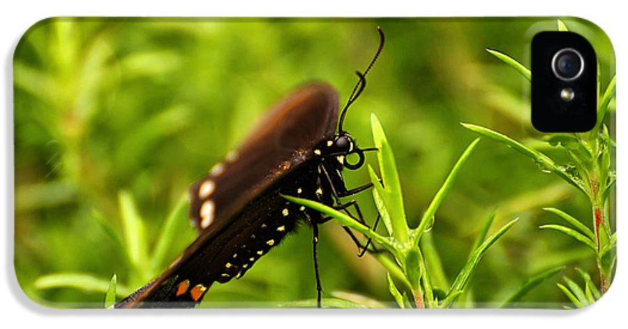 Butterfly IPhone 5 / 5s Case featuring the photograph On A Rainy Day by Lois Bryan