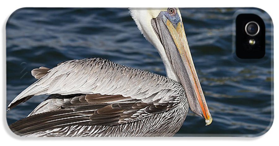 Pelican IPhone 5 / 5s Case featuring the photograph On The Edge - Brown Pelican by Kim Hojnacki