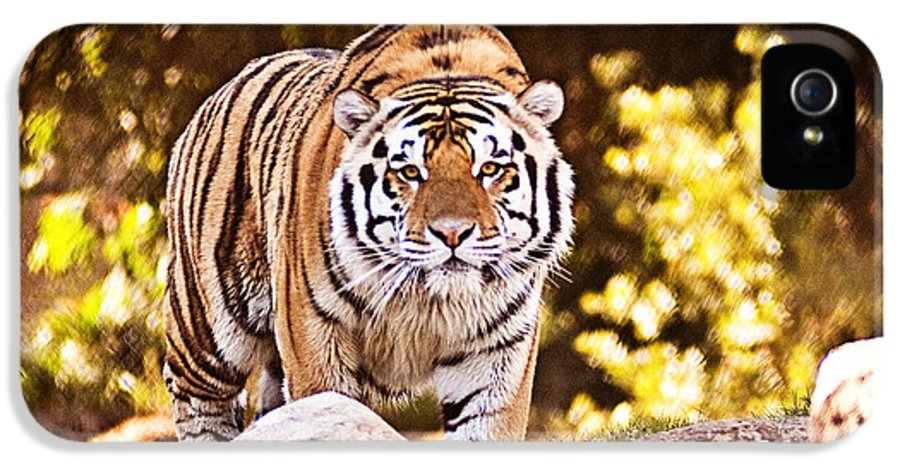 Tiger IPhone 5 / 5s Case featuring the photograph On The Prowl by Scott Pellegrin