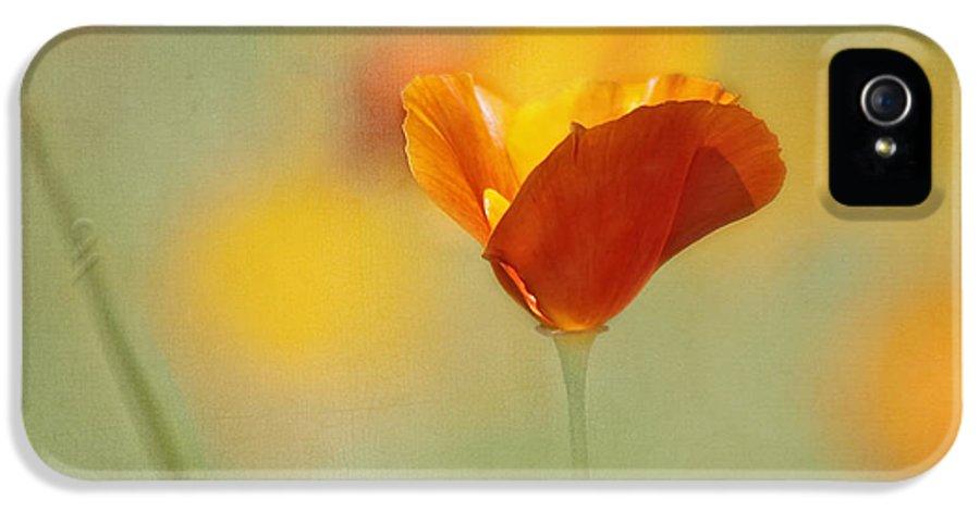 Flower IPhone 5 / 5s Case featuring the photograph Orange Crush - California Poppy by Kim Hojnacki