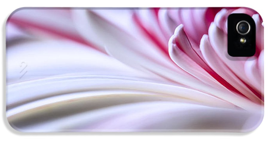 3scape Photos IPhone 5 / 5s Case featuring the photograph Pastel Gerbera by Adam Romanowicz