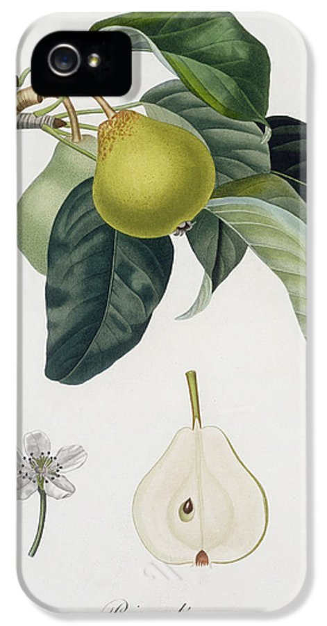Pear IPhone 5 / 5s Case featuring the painting Pear by Pierre Antoine Poiteau
