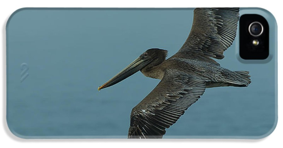 Dusk IPhone 5 / 5s Case featuring the photograph Pelican by Sebastian Musial