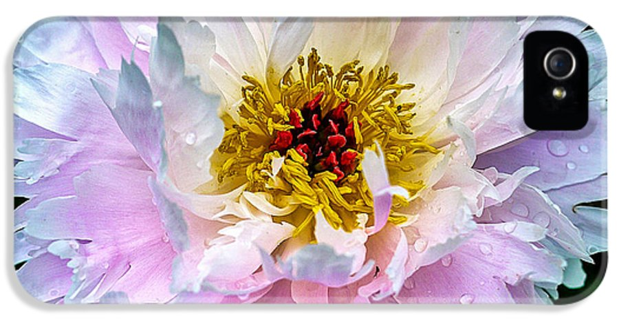 Peony IPhone 5 / 5s Case featuring the photograph Peony Flower by Edward Fielding