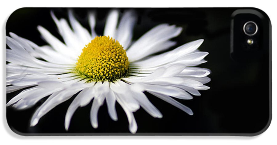 Petals IPhone 5 / 5s Case featuring the photograph Petal Dance by Rebecca Cozart