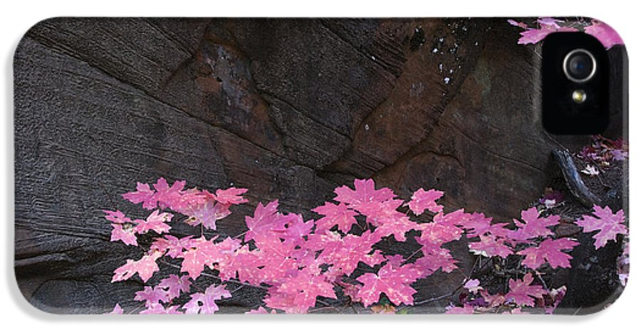 Fall IPhone 5 / 5s Case featuring the photograph Pink Fall Colors In Sedona Arizona by Dave Dilli