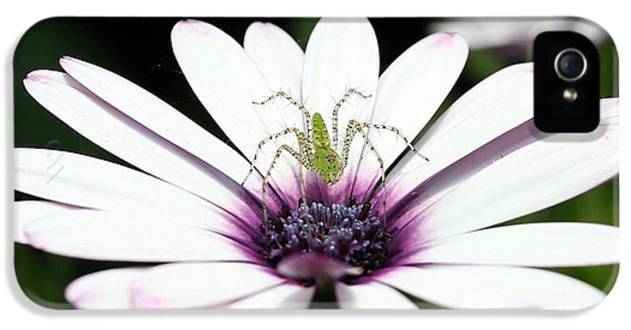 African Daisy IPhone 5 / 5s Case featuring the photograph Please Don't Jump On Me by Sabrina L Ryan