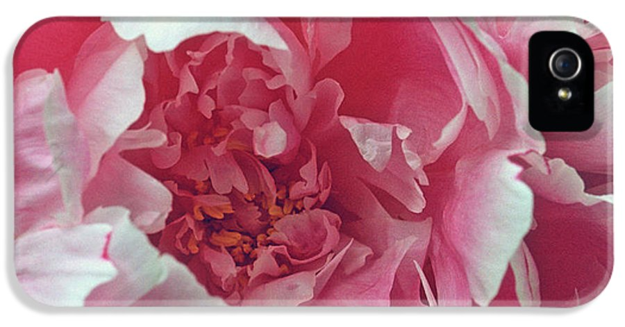 Flowers IPhone 5 / 5s Case featuring the photograph Plush Peony by Kathy Yates