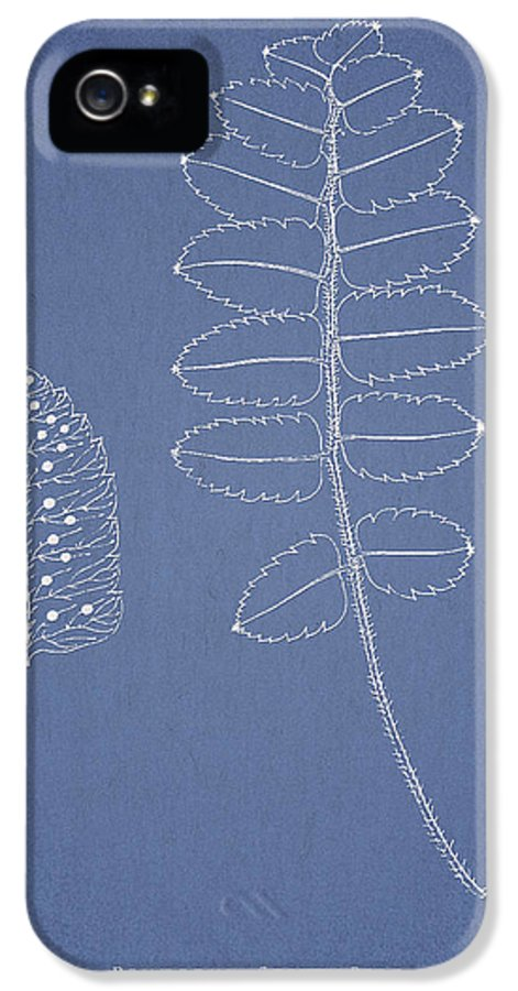 Fern IPhone 5 / 5s Case featuring the drawing Polypodium Scottii by Aged Pixel