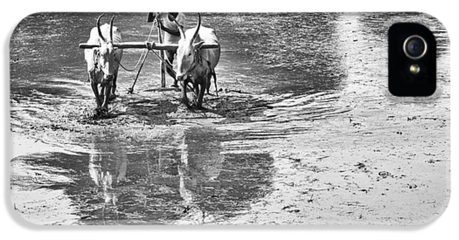 Rural IPhone 5 / 5s Case featuring the photograph Preparing A Rice Paddy by Tim Gainey