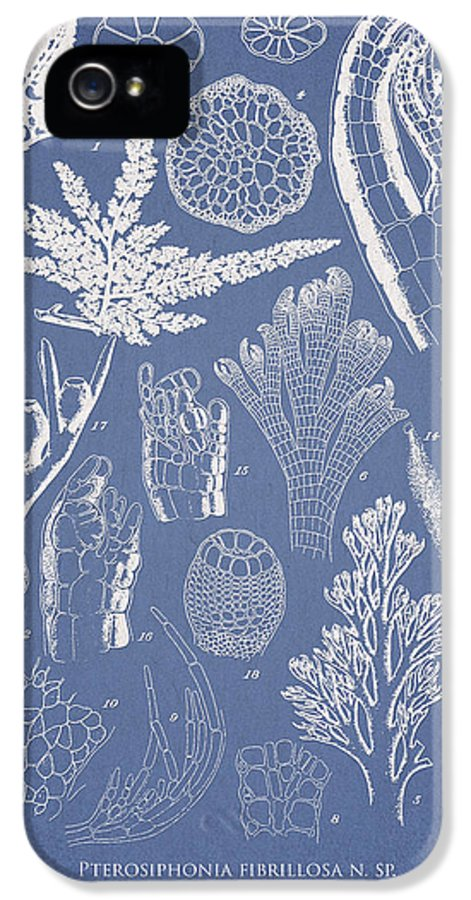 Algae IPhone 5 / 5s Case featuring the drawing Pterosiphonia Fibrillosa by Aged Pixel
