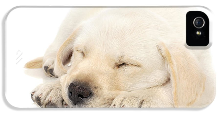 Adorable IPhone 5 / 5s Case featuring the photograph Puppy Sleeping On Paws by Johan Swanepoel