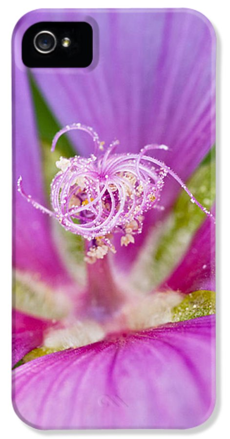 Agriculture IPhone 5 / 5s Case featuring the photograph Purple Flower by Oscar Karlsson