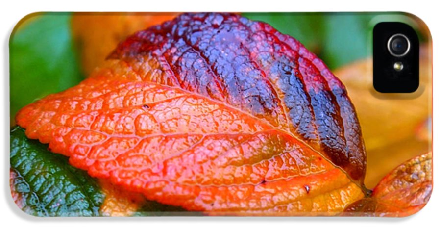 Leaf IPhone 5 / 5s Case featuring the photograph Rainy Day Leaves by Rona Black