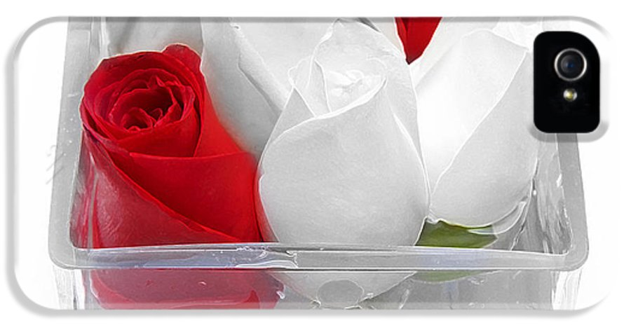 Rose IPhone 5 / 5s Case featuring the photograph Red Versus White Roses by Andee Design