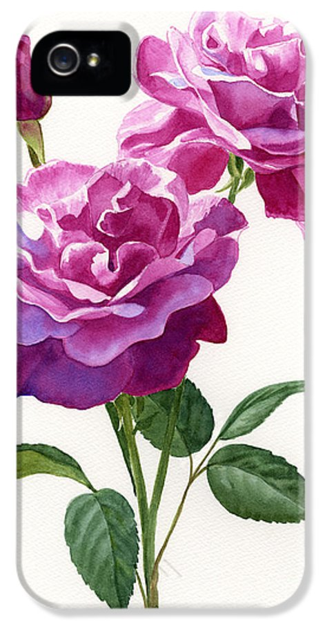 Red IPhone 5 / 5s Case featuring the painting Red Violet Roses With Bud On White by Sharon Freeman