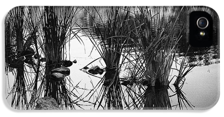 Arizona IPhone 5 / 5s Case featuring the photograph Reeds by Arne Hansen