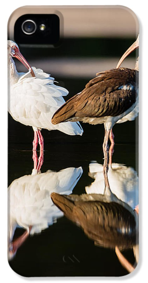 Adult IPhone 5 / 5s Case featuring the photograph Reflection Of Two Young Ibis by Andres Leon