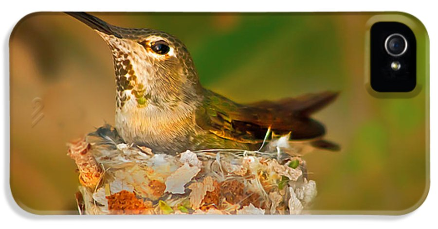 Humming Birds IPhone 5 / 5s Case featuring the photograph Repairing by Robert Bales