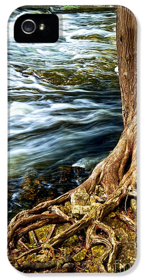 Trunk IPhone 5 / 5s Case featuring the photograph River Through Woods by Elena Elisseeva
