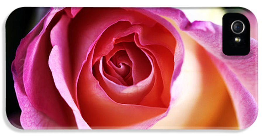 Rose IPhone 5 / 5s Case featuring the photograph Rose by John Rizzuto