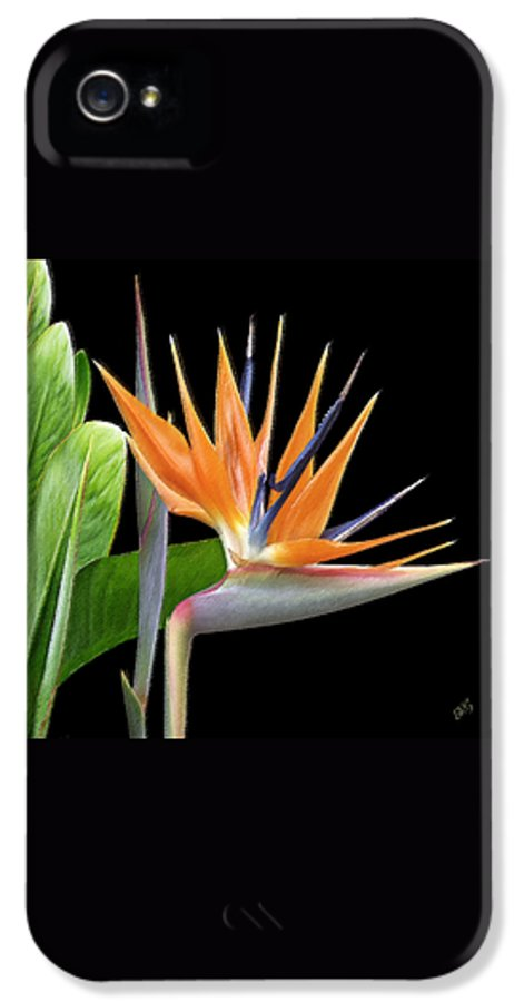 Bird Of Paradise IPhone 5 / 5s Case featuring the photograph Royal Beauty I - Bird Of Paradise by Ben and Raisa Gertsberg