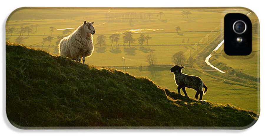 Agriculture IPhone 5 / 5s Case featuring the photograph Scottish Sheep And Lamb by Mr Doomits