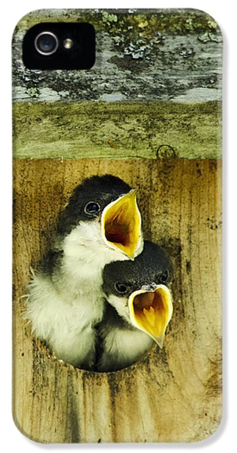 Bird IPhone 5 / 5s Case featuring the photograph Screaming Hungry by Christina Rollo