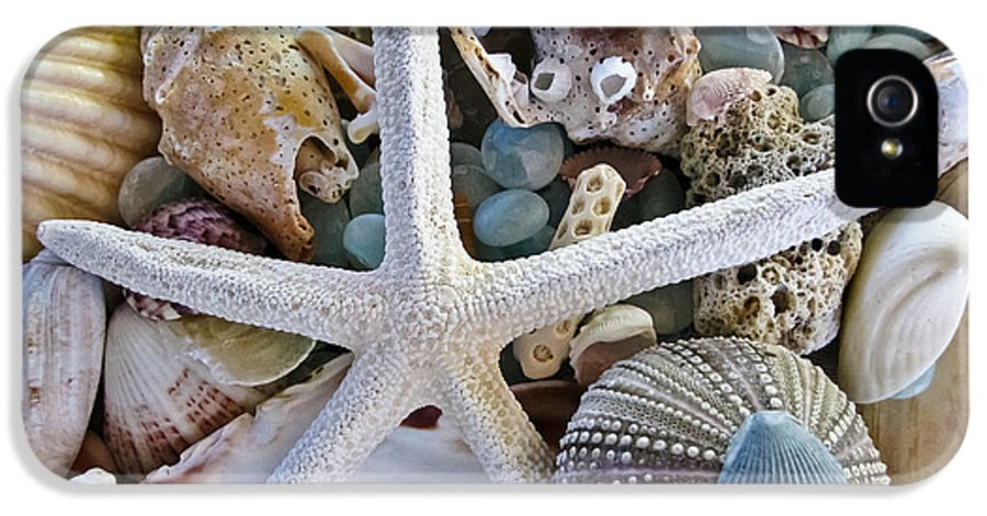 Seashells IPhone 5 / 5s Case featuring the photograph Sea Treasure by Colleen Kammerer