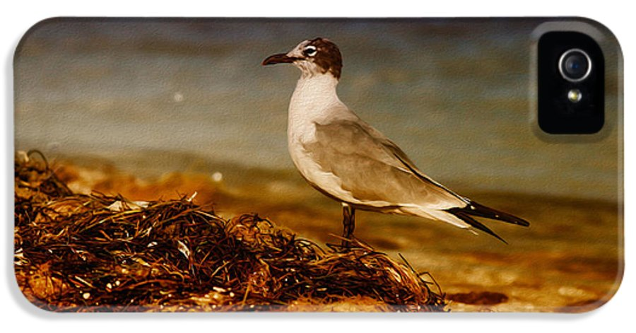 Seagull IPhone 5 / 5s Case featuring the photograph Seagull At The Keys by Deborah Benoit