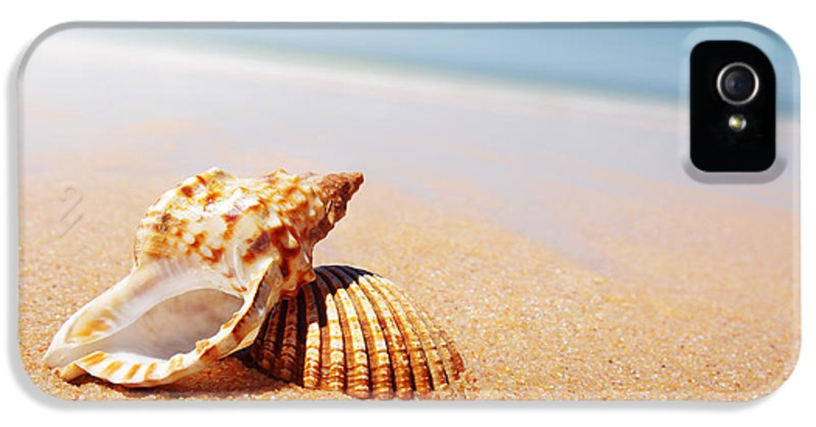 Abstract IPhone 5 / 5s Case featuring the photograph Seashell And Conch by Carlos Caetano