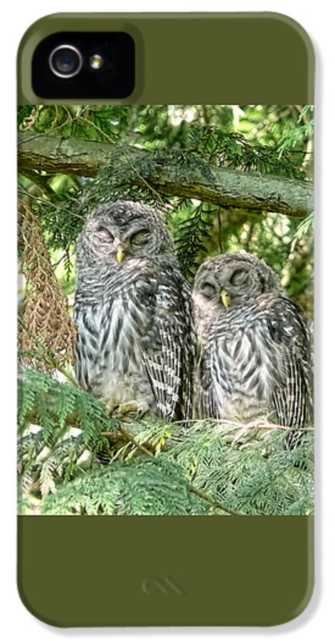 Owl IPhone 5 / 5s Case featuring the photograph Sleeping Barred Owlets by Jennie Marie Schell