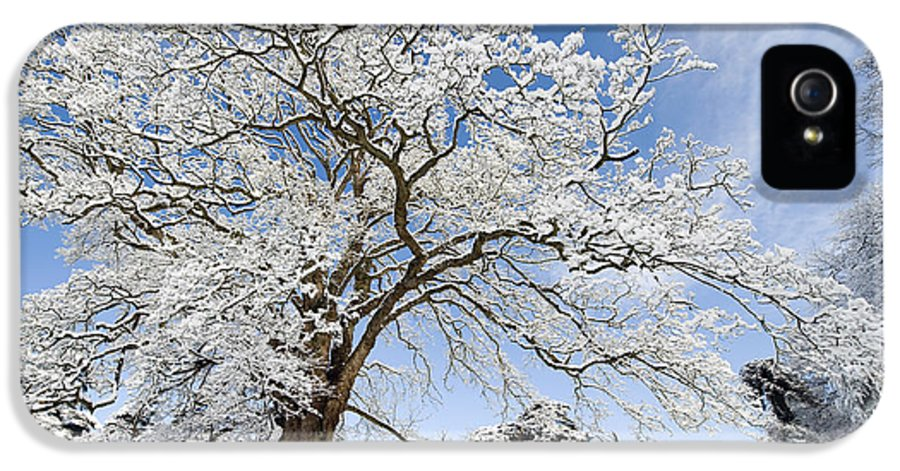 Christmas IPhone 5 / 5s Case featuring the photograph Snow Covered Winter Oak Tree by Tim Gainey