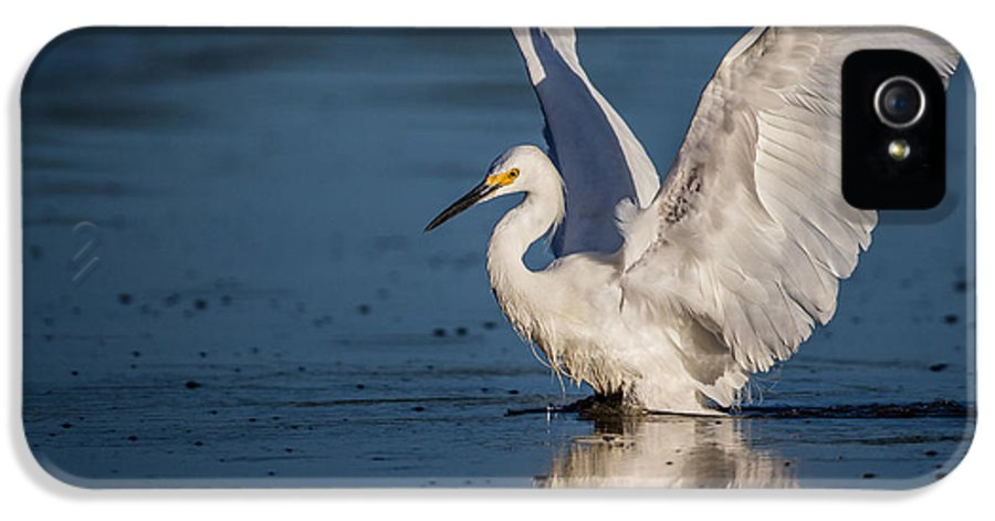 Alba IPhone 5 / 5s Case featuring the photograph Snowy Egret Frolicking In The Water by Andres Leon