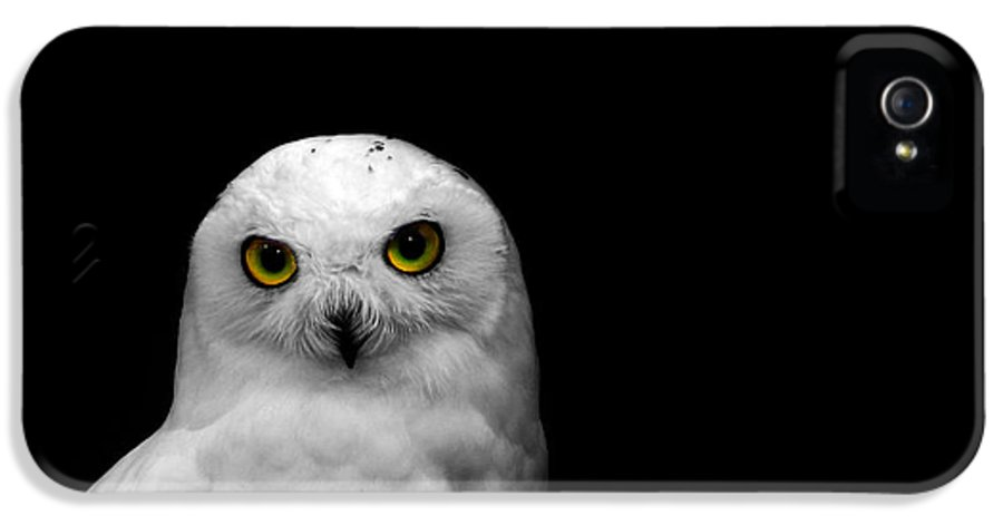 Snowy Owl IPhone 5 / 5s Case featuring the photograph Snowy Owl by Mark Rogan