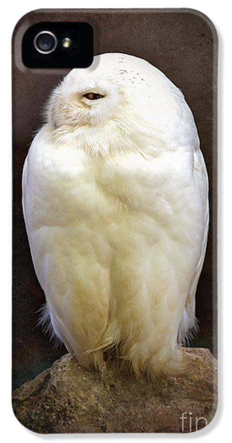 Owl IPhone 5 / 5s Case featuring the photograph Snowy Owl Vintage by Jane Rix