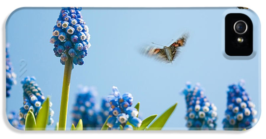 Grape Hyacinth And Butterflies IPhone 5 / 5s Case featuring the photograph Something In The Air by John Edwards