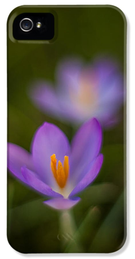 Crocus IPhone 5 / 5s Case featuring the photograph Spring Crocus Glow by Mike Reid