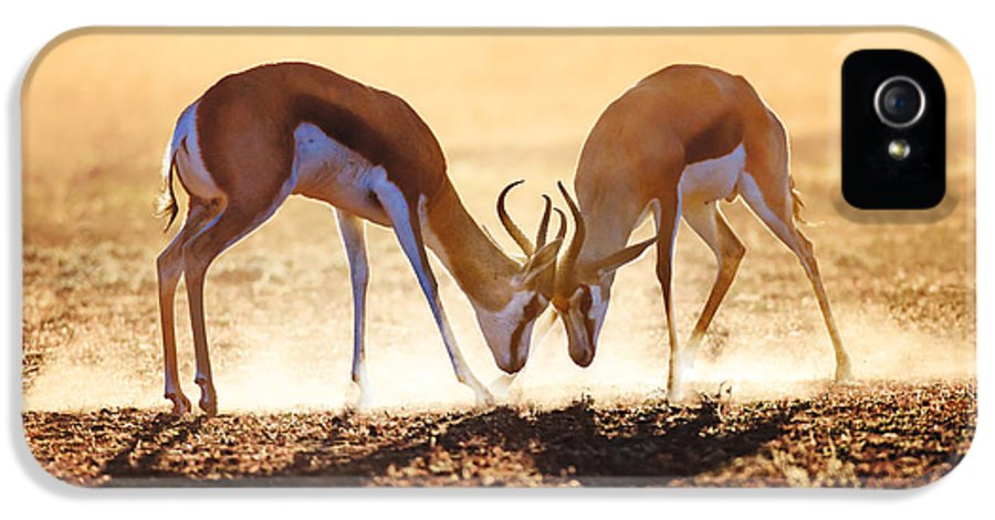 Springbok IPhone 5 / 5s Case featuring the photograph Springbok Dual In Dust by Johan Swanepoel