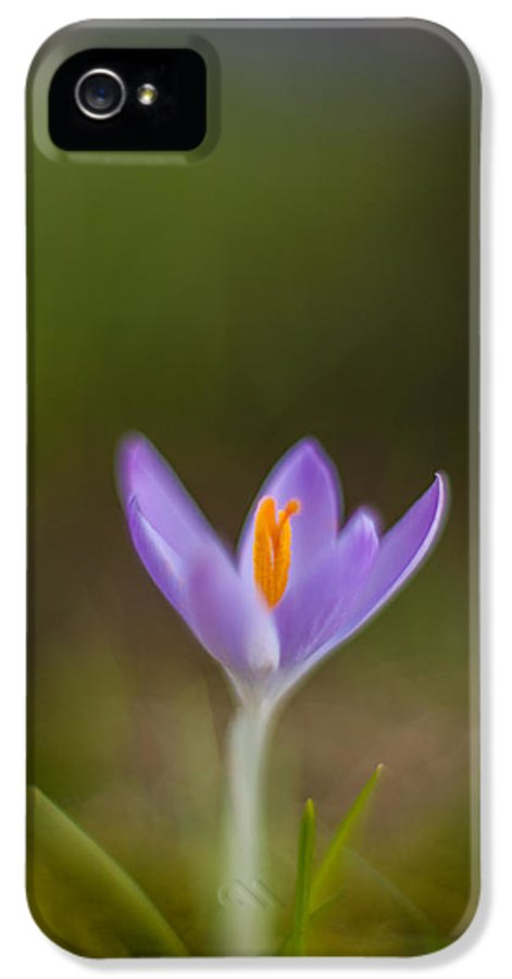 Crocus IPhone 5 / 5s Case featuring the photograph Springs Testament by Mike Reid