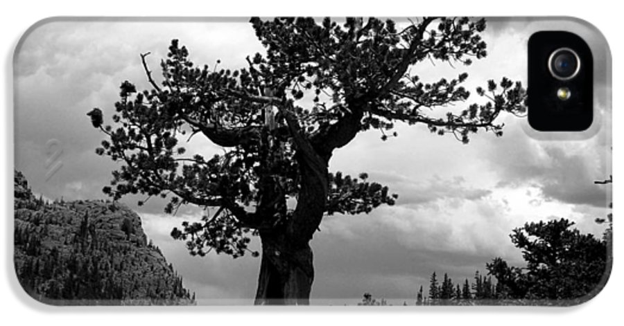 Tranquil IPhone 5 / 5s Case featuring the photograph Storm Tree by Tranquil Light Photography